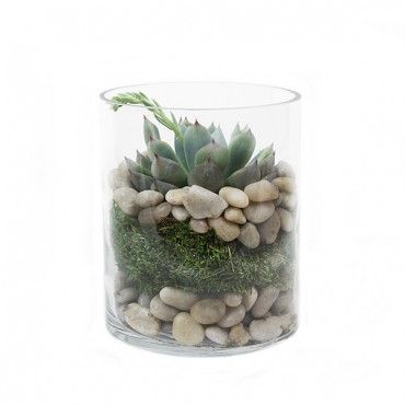Plantshed Stone Rose Succulent Plant Delivery Nyc One Of Our