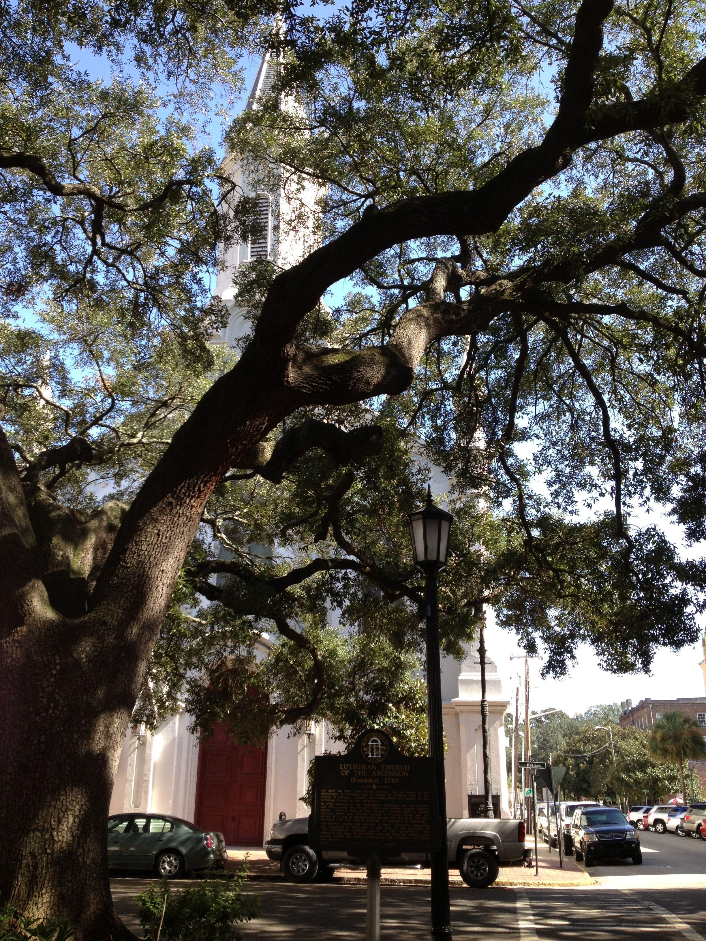 Beautiful church visible through the live oaks, Savannah, GA