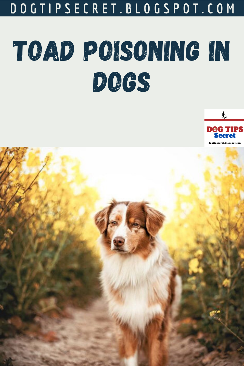 Toad Poisoning in Dogs Dog Health Tips in 2020 Dog