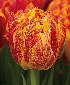 Цветики-Цветочки. | Тюльпаны, Желтые тюльпаны, Цветы