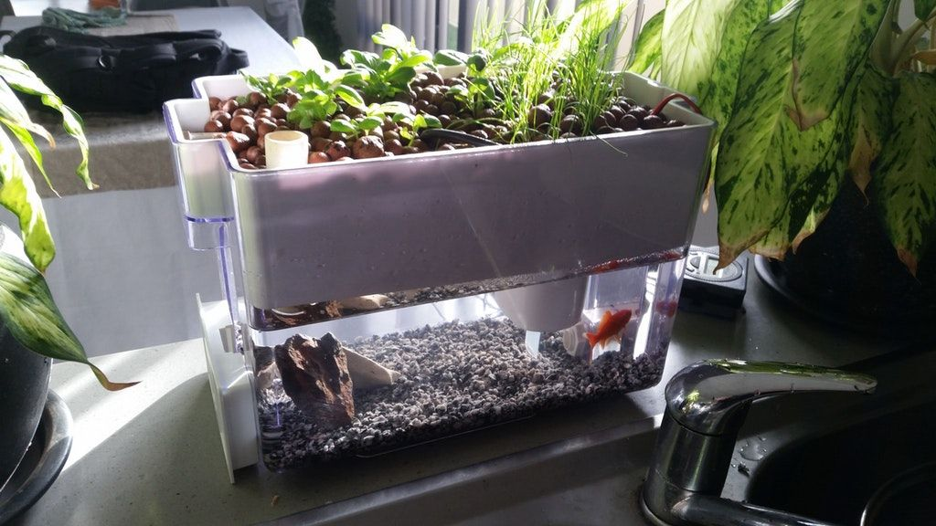 I Turned My Brita Water Filter Into A Countertop Aquaponics System