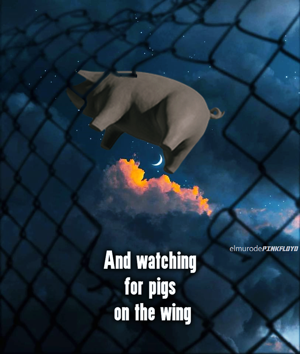 Pigs on the wing Pink floyd pig, Pink floyd lyrics, Pink