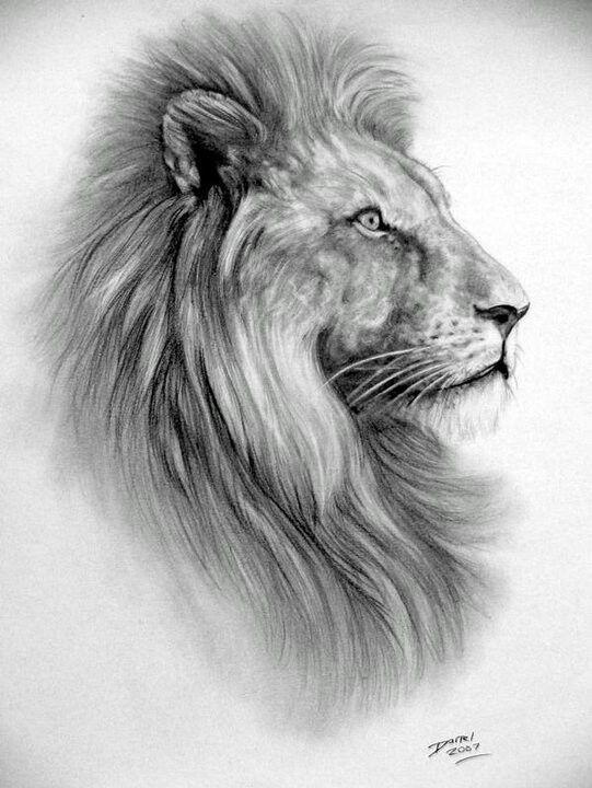 Lion High Quality Emailed Pdf Cross Stitch Chart Pattern Original Art By Darrel Bevan Lion Art Lion Sketch Art
