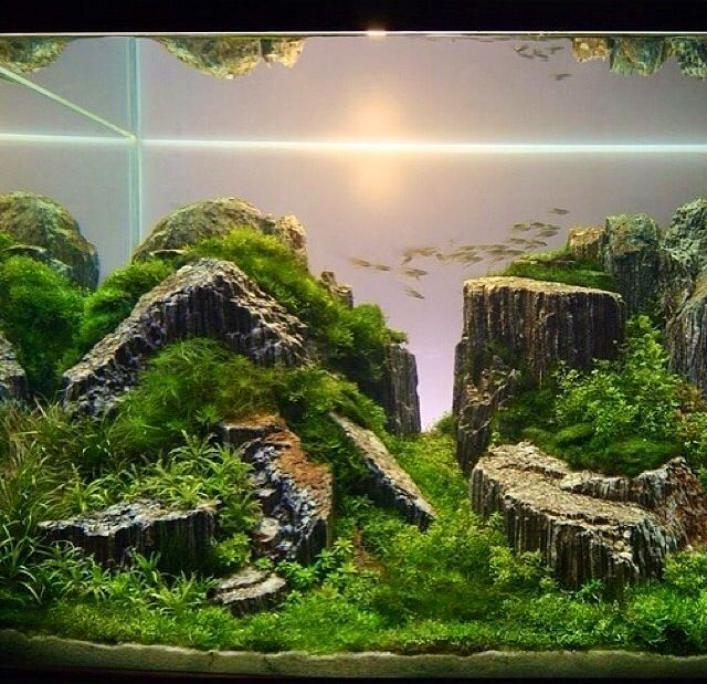 Furniture, Aquascaping Designs For Your Beautiful Aquarium : Small Fish  Coral Reef Water Plants Stunning Layout, ]