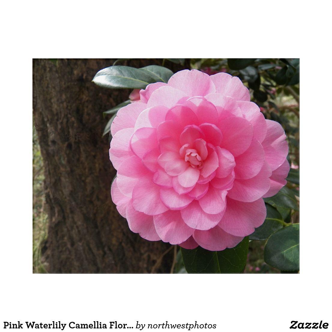 Pink waterlily camellia floral acrylic wall art acrylic wall art