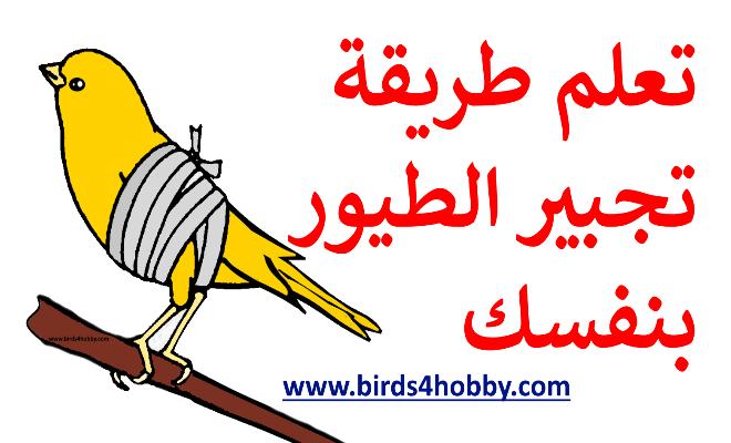 طريقة علاج كسر جناح او رجل الطيور في المنزل Friend Photos Photo