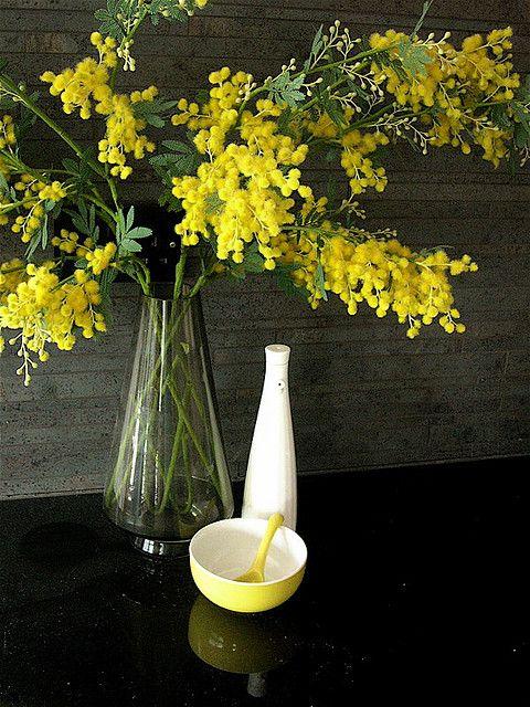 Fiori Gialli Yahoo.Mimosa Bellissimi Fiori Fiori Gialli E Piantare Fiori