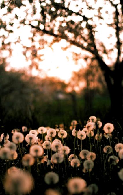 Summer Nature Photography Flowers Dandy 55+ Ideas -  Summer Nature Photography Flowers Dandy 55+ Ideas #photography #flowers #nature  - #AnimalPhotography #dandy #flowers #ideas #LandscapePhotography #nature #photography #Summer #WeddingPhotography