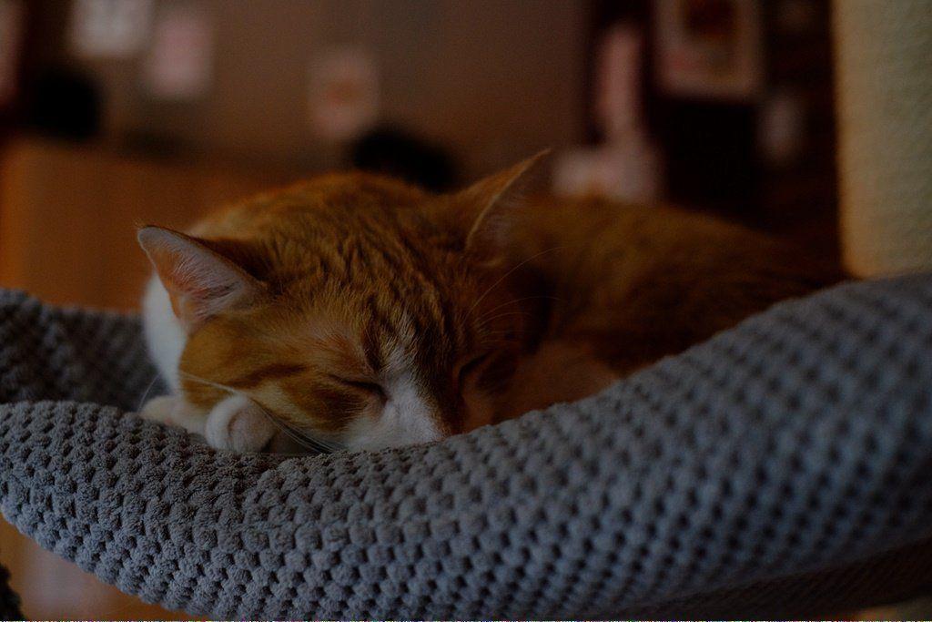 Cats Kneading Catsthirdeyelid Why Do Cats Purr Dog Cat Grumpy Cat Humor