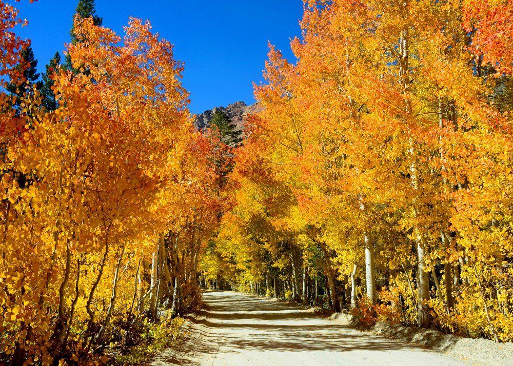 2016 fall foliage report - Resultados Yahoo Search da busca de imagens