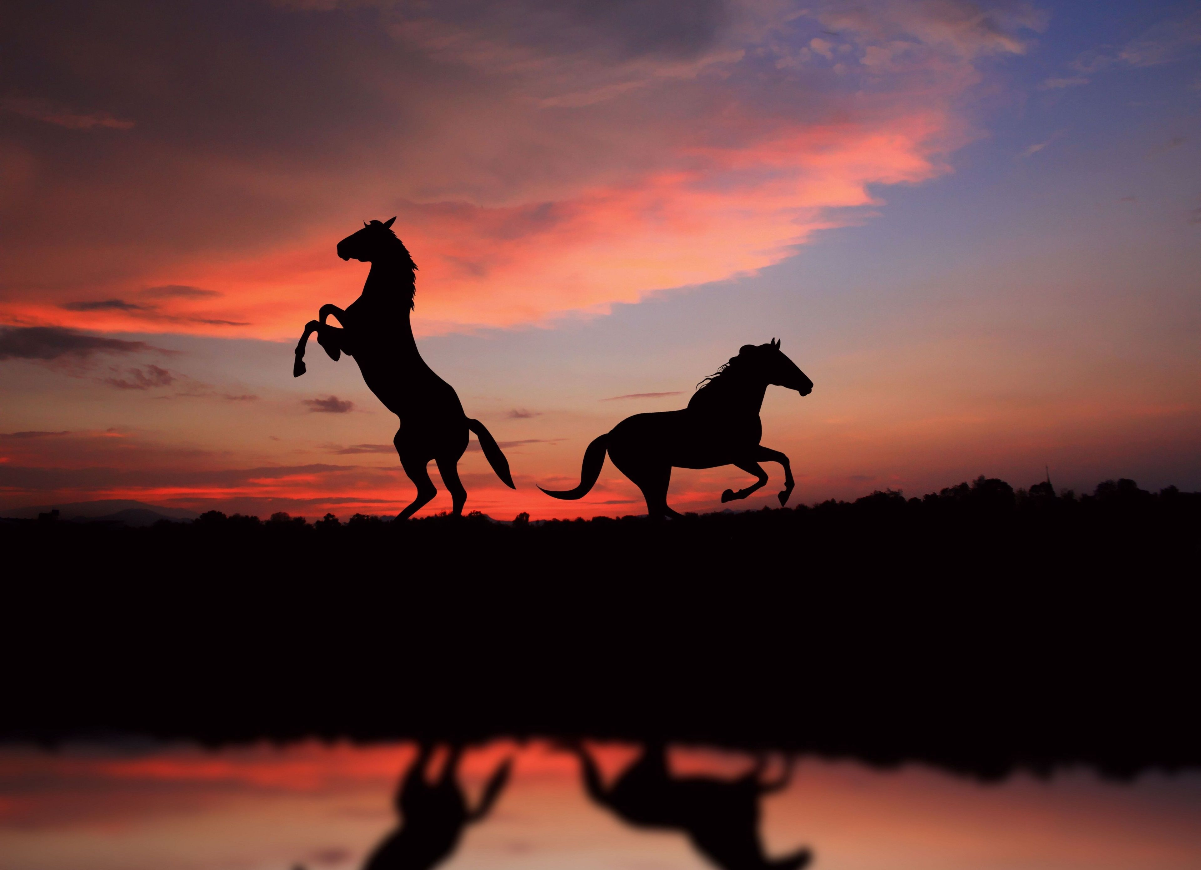 3840x2781 Horse 4k Pc Wallpaper Download Horse Wallpaper Horses Horse Silhouette
