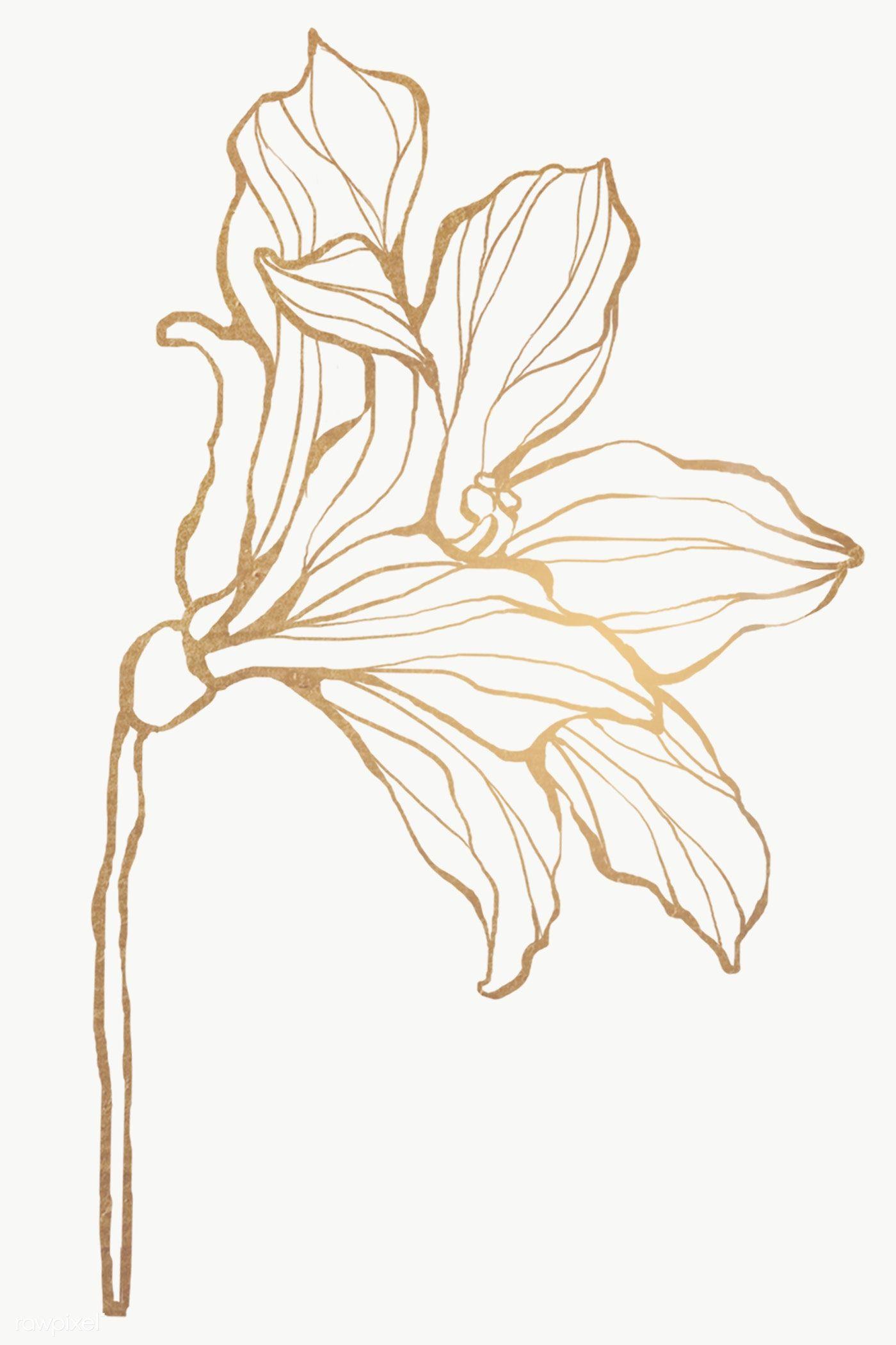 Detailed Golden Leaves Transparent Pg Premium Image By Rawpixel Com Nunny Line Art Flowers Flower Drawing Flower Outline
