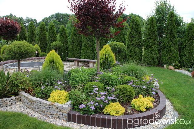 Wizytówka - Igiełkowy ogródeczek - Forum ogrodnicze - Ogrodowisko
