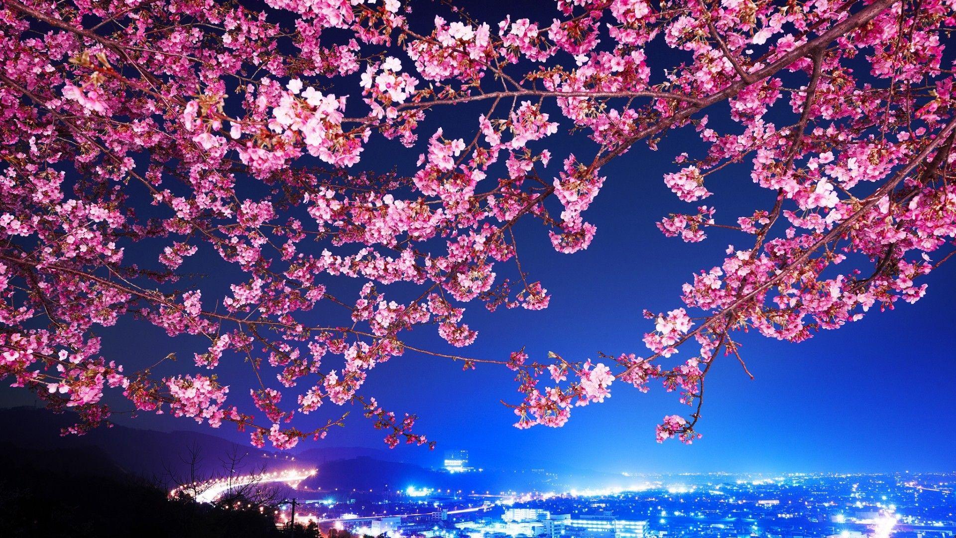 Cityscape Night View Blue Flowers City Night Tokyo