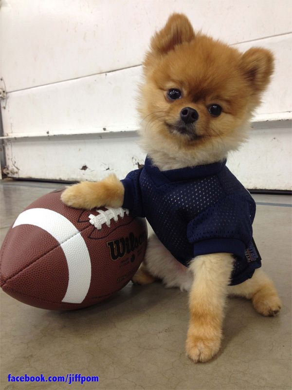 We're all getting pretty excited for Sunday's big game, when the Giants take on the Patriots in Super Bowl XLVI. But nobody seems to be quite as excited as Jiff.