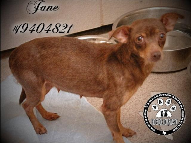 SOMEONE HAVE PITY FOR JANE! KILLED/EU TODAY/ MARCH 22