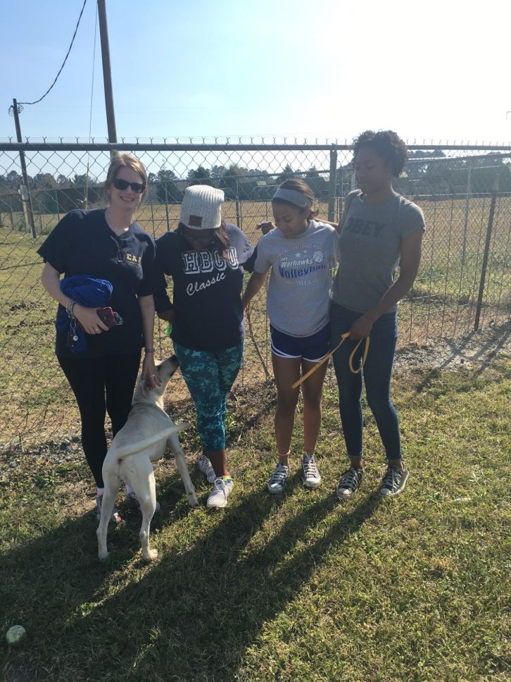 16++ Lowndes county animal shelter ideas