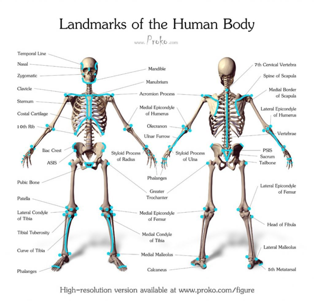 Bony Landmarks Of The Body 550f7fcf C 983