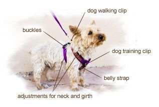Walk In Sync With Your Dog Dogs Training Your Dog Dog Walking