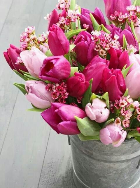Pin by Monica Janos on Tulips | Pinterest | Flowers, Beautiful ...