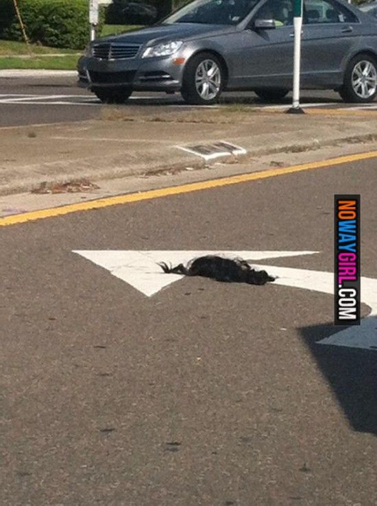 Meanwhile in the ghetto someone left their weave in the turn lane. TUMBLE WEAVE!!!!