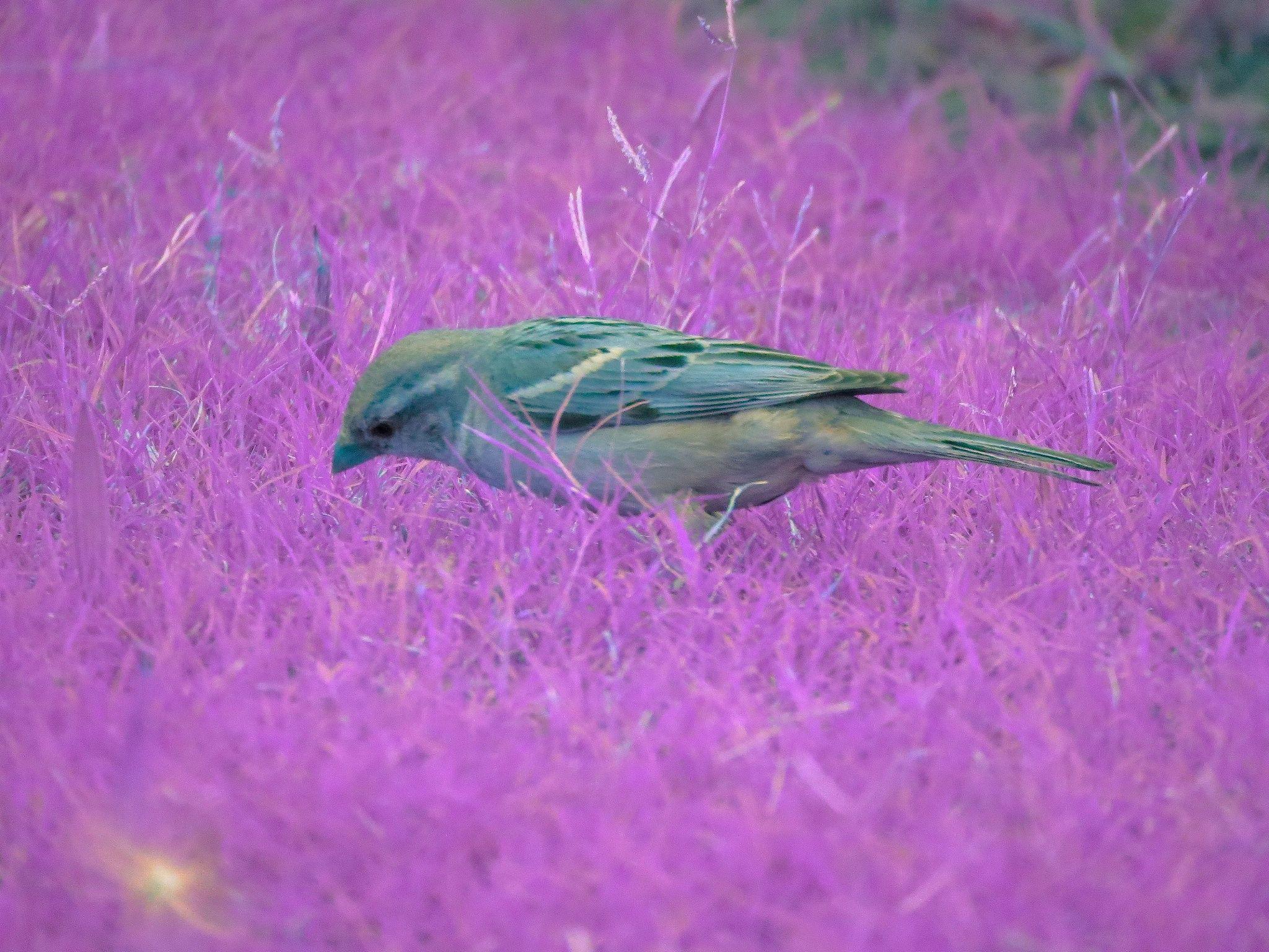 Little birdie in a magical garden by fatima mehdi on 500px