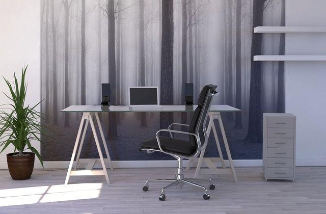 Fog & Trees - Fototapeter & Tapeter - Photowall