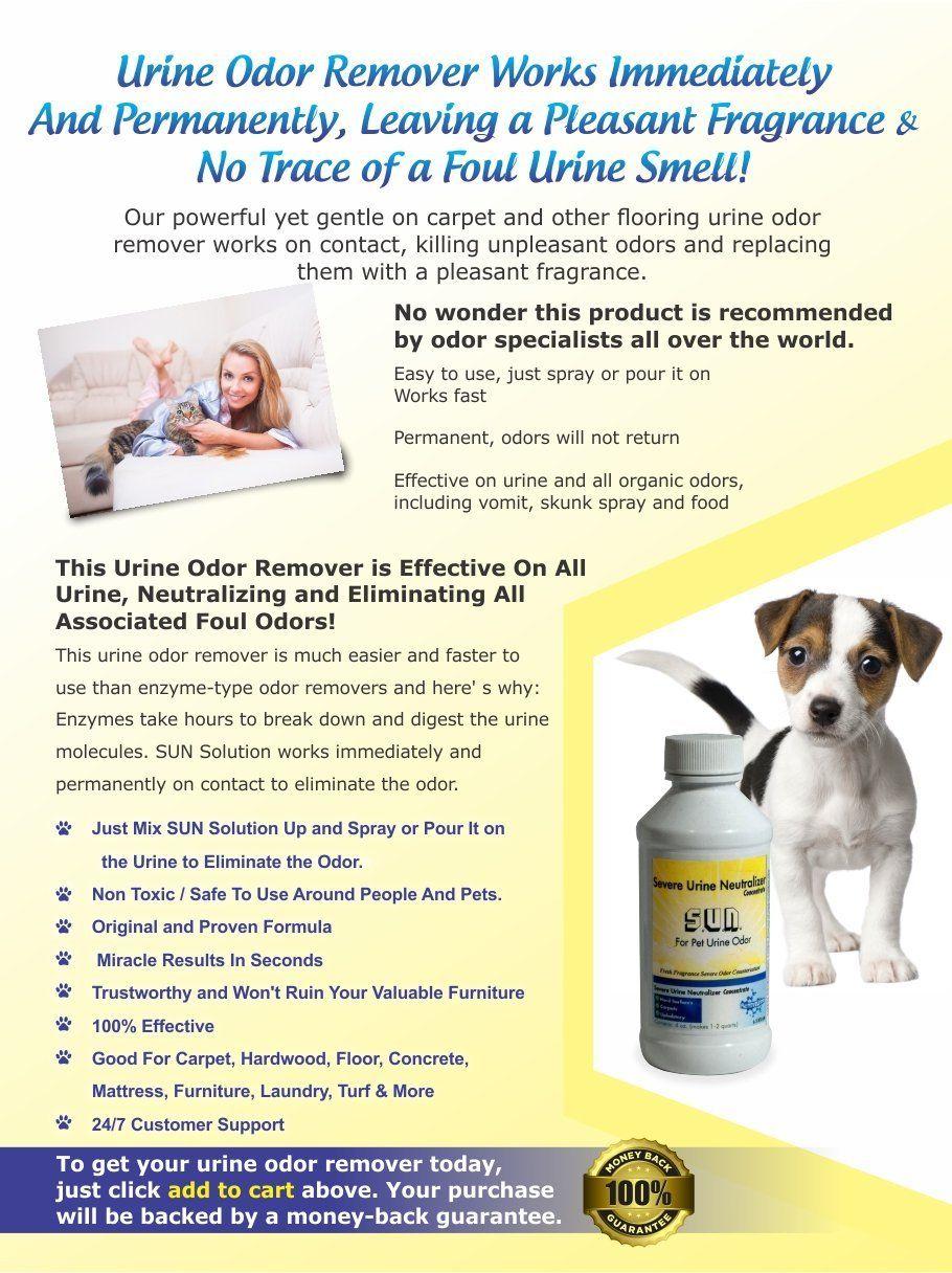 Amazon Com Professional Grade Dog And Cat Urine Stain