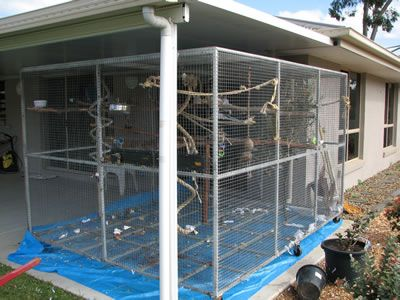 Large Aviary Installed Into Rear Patio