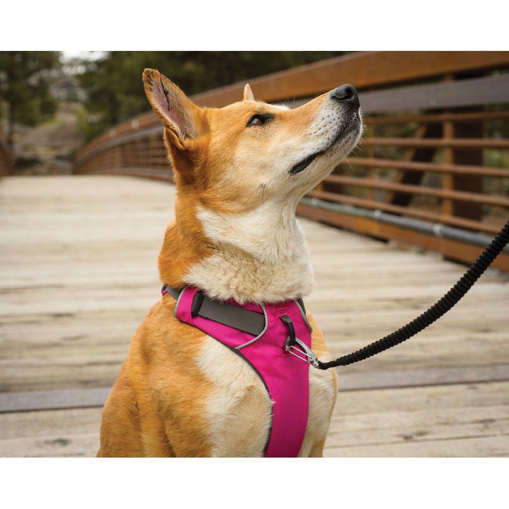 Ruffwear Front Range Leash Review Dog Harness Dogs Best Dogs