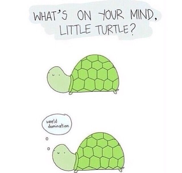 Pin By Hailey Duke On Funny Stuff Turtles Funny Turtle Quotes World Turtle Day