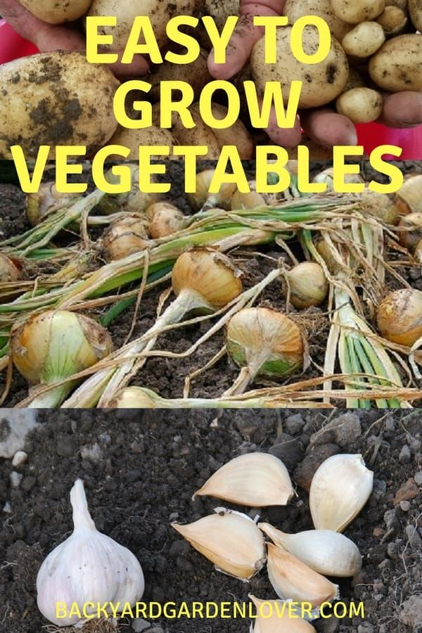 How To Grow Your Own Vegetables Easy Vegetables To Grow 400 x 300