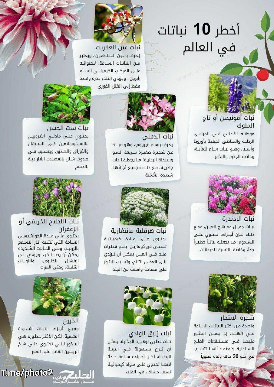 أخطر 10 نباتات في العالم Plants Lily 10 Things