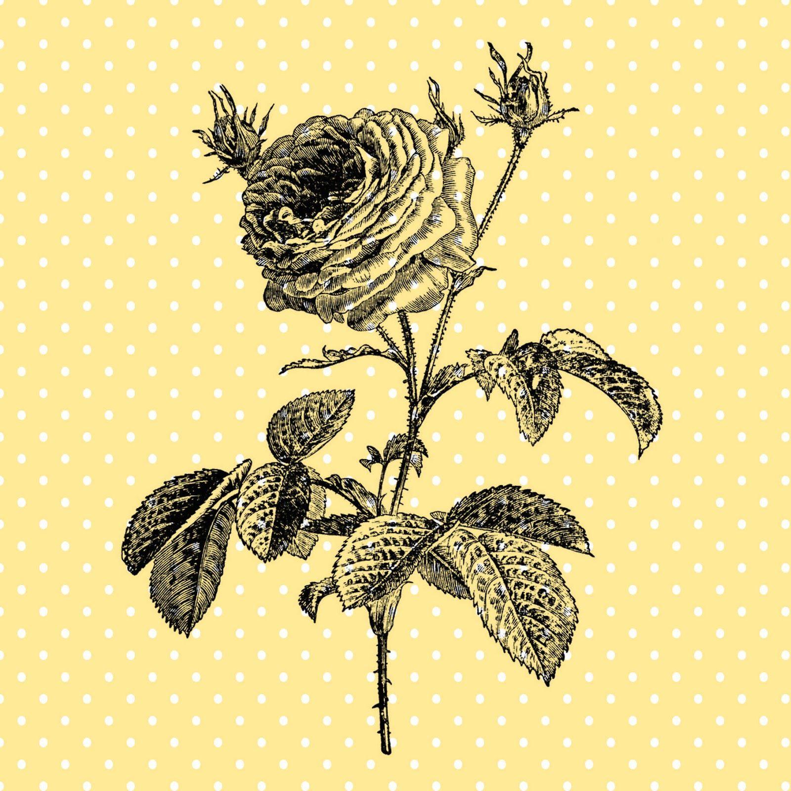 free+digital+scrapbook+paper+yellow+rose.jpg 1'600×1'600 piksel