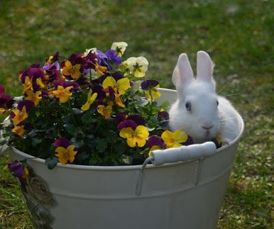 Kaninchen Geburtstag Unsere Haustiere Linkparty 4 Haustiere Kaninchen Geburtstag