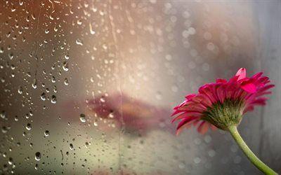 Scarica Sfondi Gocce Di Pioggia Vetro Fiore Foto Pioggia