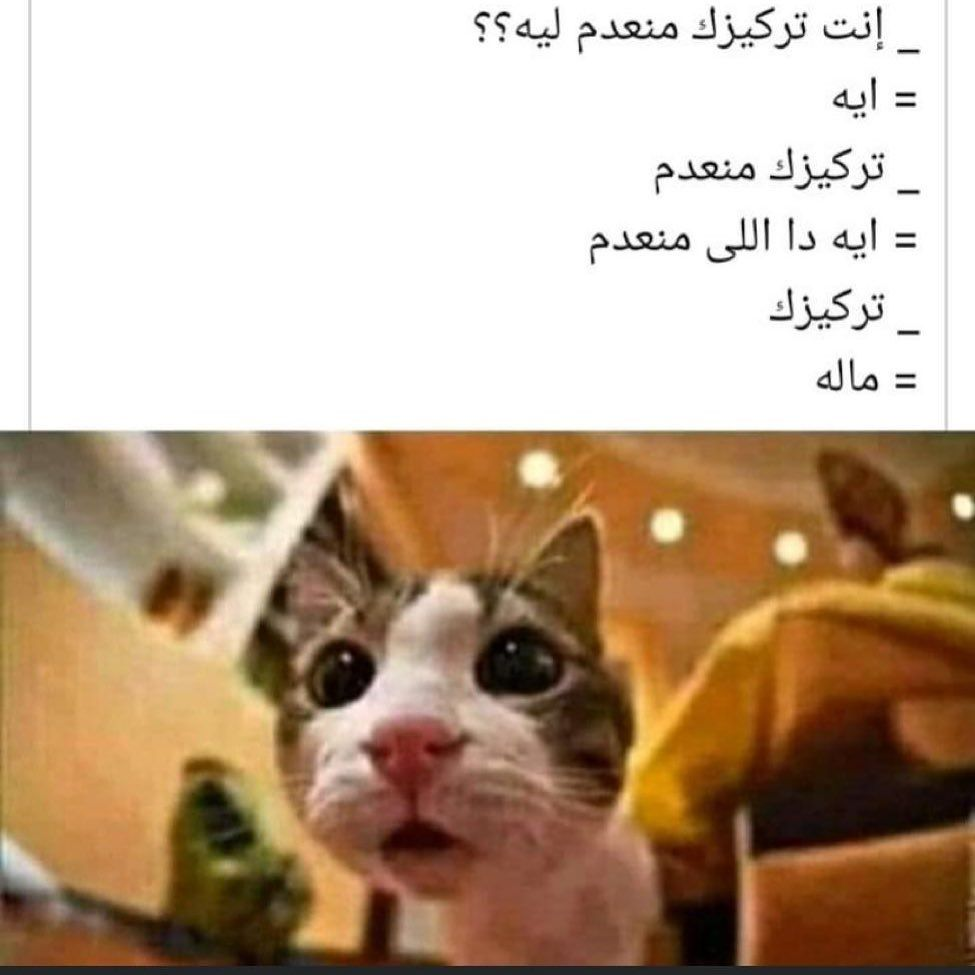 Pin By Hussein Ouda On طريف Animals Cats Hamster
