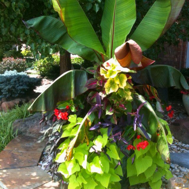 Semi Shade Planting Easy To Maintain Plants Garden 400 x 300