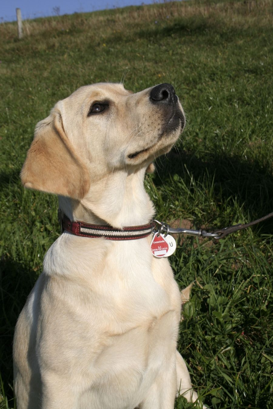 Keine Namen auf das Hundehalsband eingravieren lassen ~ Why you shouldn't leave your dog's name on the dog collar
