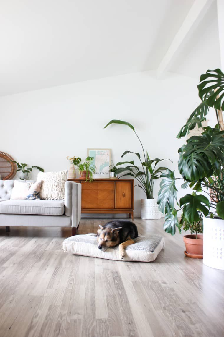 100 Plants And Two Dogs Fill This Interior Designer S Bright