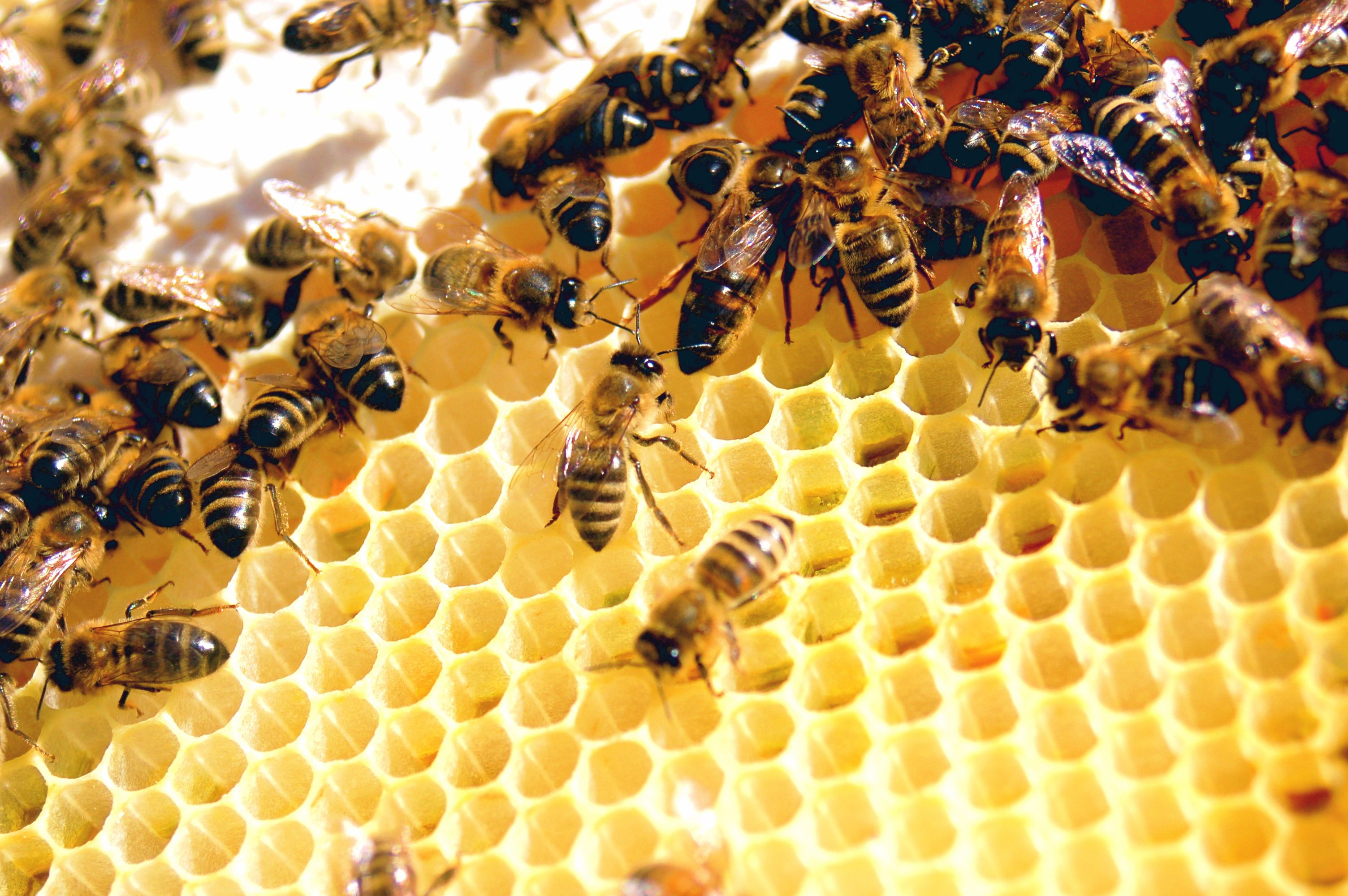 How To Remove Bees Pure Honey Bee Pure Products