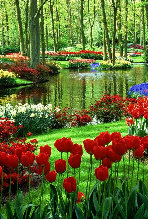 Chennai Cafe Beautiful Gardens Most Beautiful Gardens Beautiful Flowers Garden