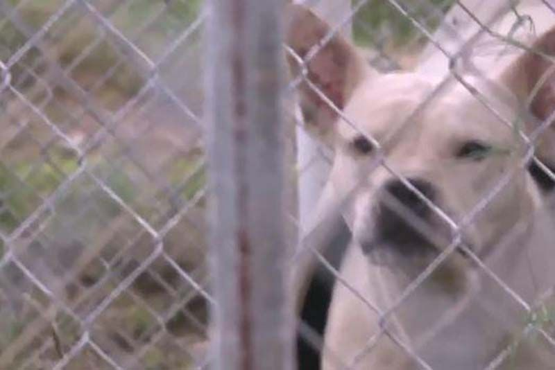 18+ Animal shelters in arkansas images