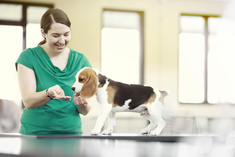 Veterinary Specialty Hospital Pet Clinic Pet Sitting Jobs Pet Clinic Pet Care