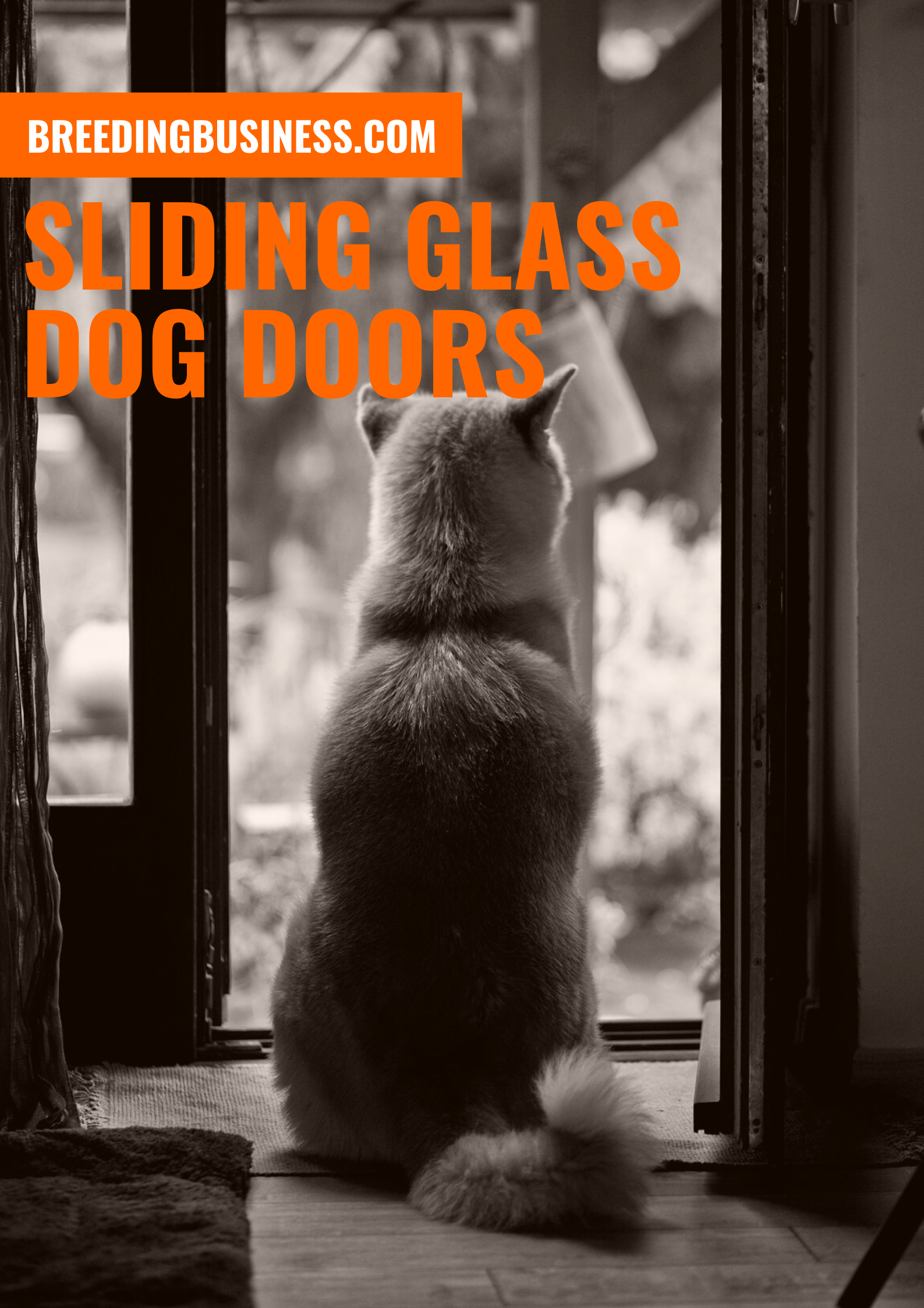 SLIDING GLASS DOG DOORS REVIEWS, BUYING GUIDE