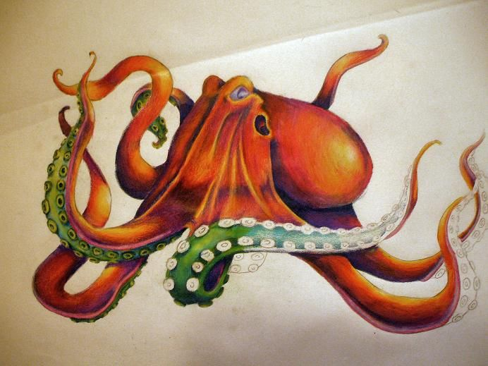 Octopus by ~SuperTuesday