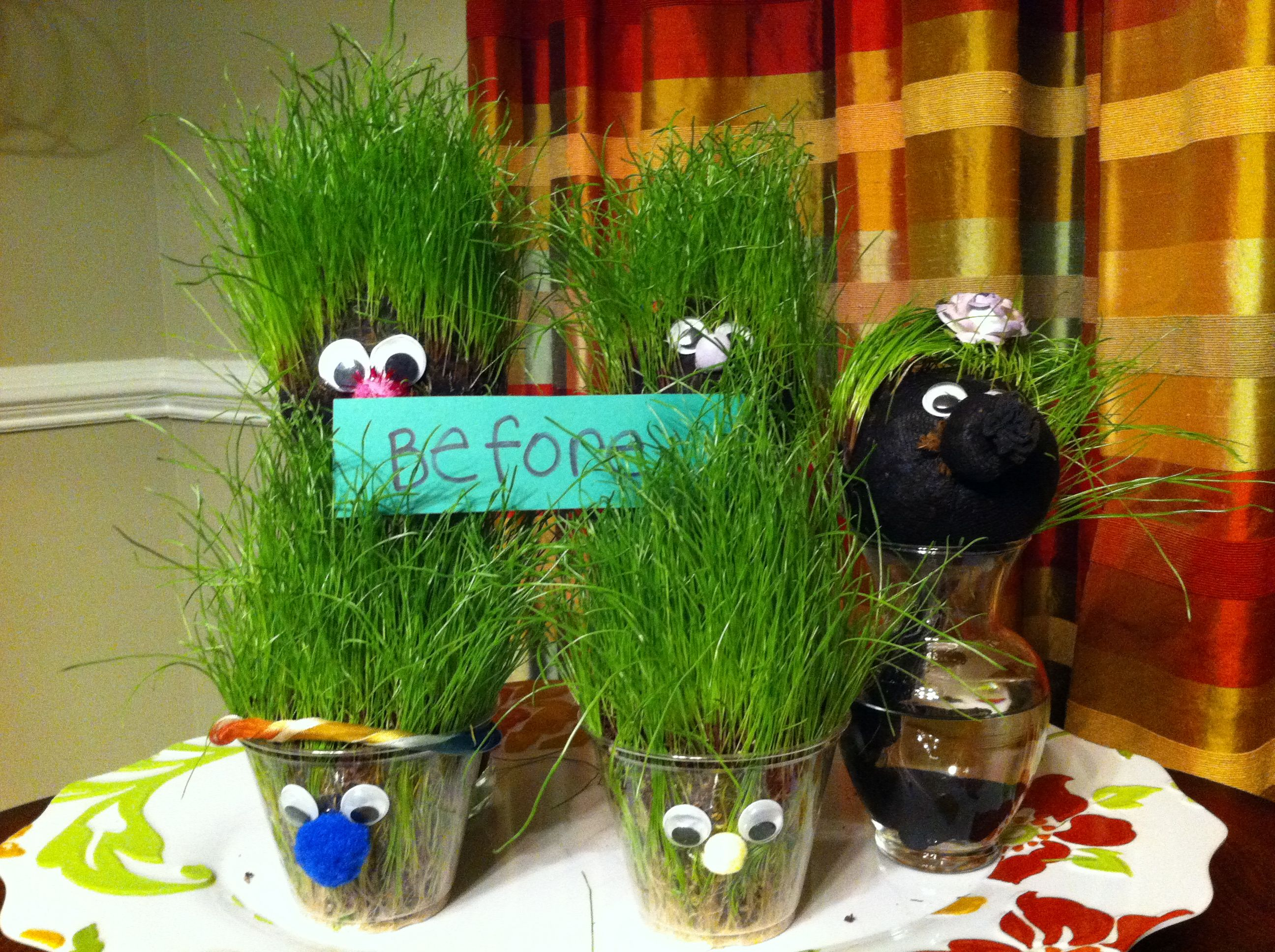 "Grass heads- rye seeds in clear cups or in a nylon ball with ""tail"" drinking water in glass jar"