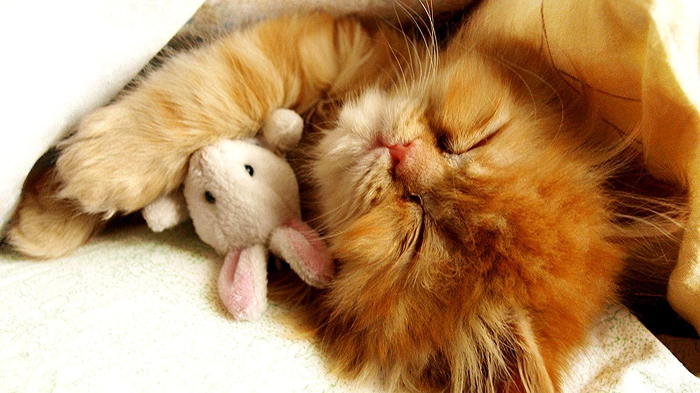 Cute Kitten Backgrounds Wallpaper Free Download