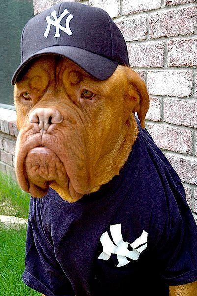 I know a guy who looks just like this old dog. LOL great pix setup