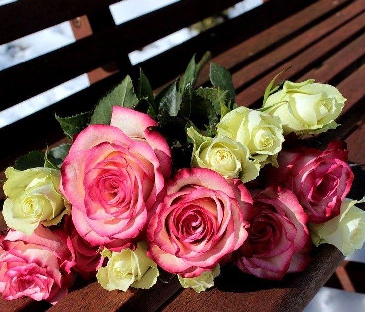 трусах другие картинки с розами на день учителя любуюсь